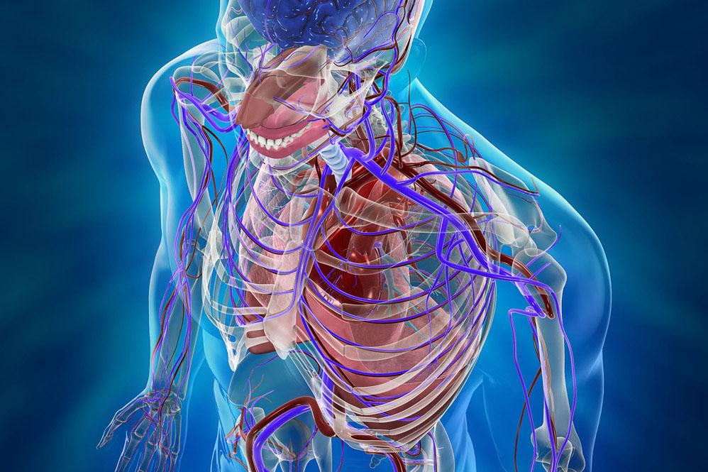 Chirurgia Vascolare ed Endovascolare - Istituto Neuromed 8e5bbe491a76